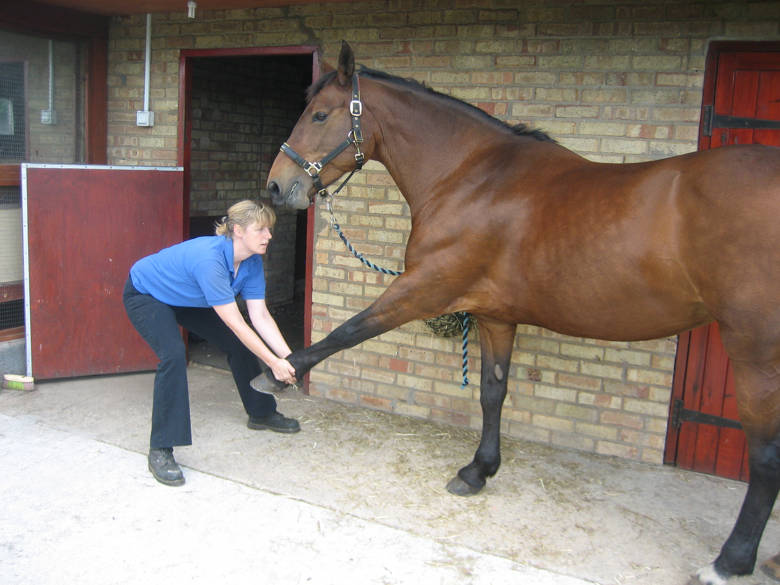 Equine Holistic Therapy Massage Amp Reiki Hayley Drakes
