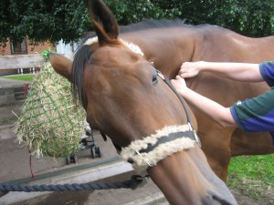 Equine - Shoulder Work - Baz