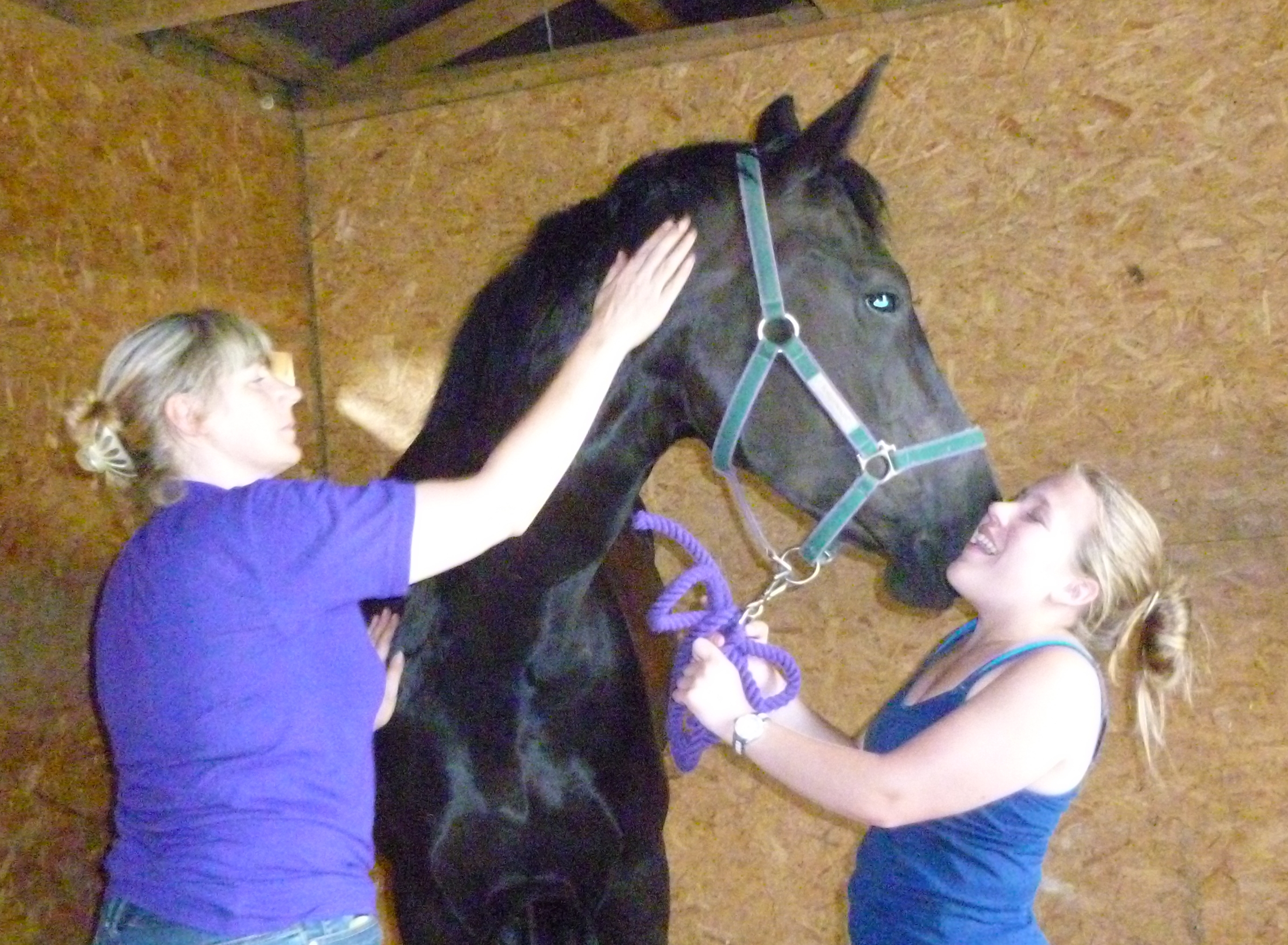 Equine physical therapy - If You Suspect Injury Or Physical Ailment You Must Seek Diagnosis From Your Vet In The First Instance Any Physical Therapy Requires By Law