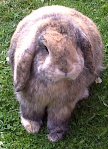 Binky the Rabbit